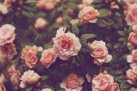 Vintage Flowers Tumblr Desktop ...