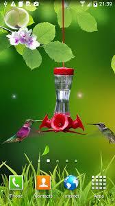 hummingbird wallpapers hd screenshot 6