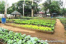 best soil for vegetable garden. organic container vegetable gardening lettuce garden in city circle best soil for .