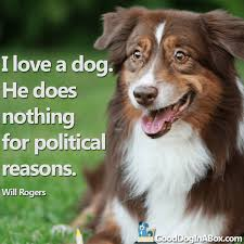 Quotes About Dogs And Friendship Fascinating Dog Quotes Dog Pictures Share With Your Friends