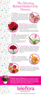 Calla Lily Color Chart Infographic The Meaning Of Mothers Day Flowers Teleflora