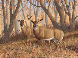 deers painting whitetail deer painting fall flame by crista forest