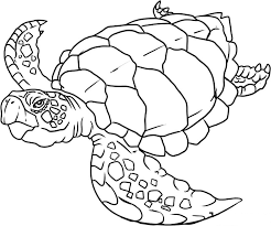 Ocean Animals Color Pages Ocean Animals Coloring Pages Printable Coloring Pages