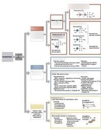 Endocrine Hormone Classification Chart Diagram Quizlet
