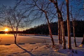 Bildergebnis für weihnachtswald bilder gratis