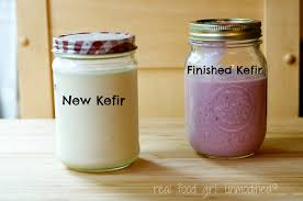 kefir milk. cconquering milk kefir with real food girl: unmodified t