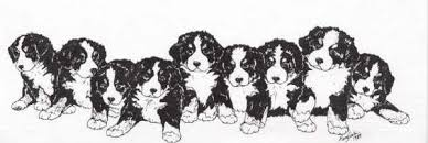 Small Picture Bernese mountain dog Graphics and Animated Gifs PicGifscom