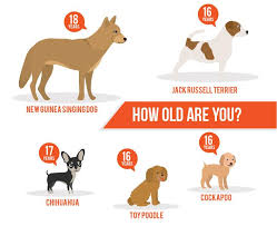 Pitbull Dog Years Chart Lifespan Of A Dog A Dog Years Chart By Breed
