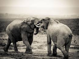 A The Biologist Ivory Elephant Trade Illegal Decided Appalled In By ZwR0x0