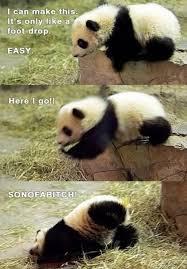 cute panda bear funny
