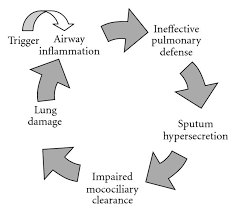 The Pathophysiology Of Bronchiectasis The Inflammatory Cycle