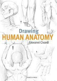 That's a lot of different areas you have to focus on, and you have to make sure that they are all drawn proportionately. Human Anatomy Drawing At Paintingvalley Com Explore Collection Of Human Anatomy Drawing