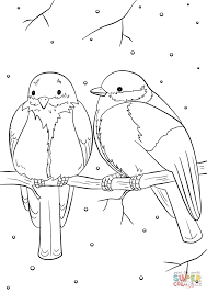 Winter Birds coloring page | Free Printable Coloring Pages