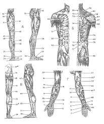 Массаж при детском церебральном параличе классический точечный  точечный массаж при ДЦП