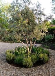 Small Picture Spanish Courtyard love the olive tree and sage Would work well