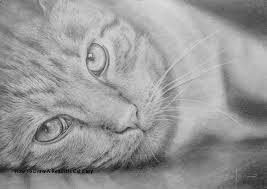 realistic cat drawing in pencil. Fine Pencil How To Draw A Realistic Cat Easy 120 Best Pencil Drawing Lessons Images On  Pinterest Of Throughout In W