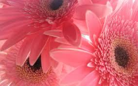 desktop wallpaper pink pink iky 74