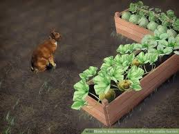 image titled keep animals out of your vegetable garden step 7