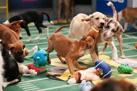 puppy bowl 2015 falcor. Beautiful Bowl For Puppy Bowl 2015 Falcor T