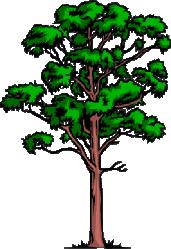 """Résultat de recherche d'images pour """"arbres gif"""""""