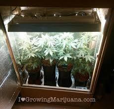 cupboard grow room cans