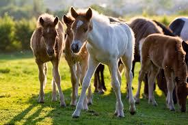 Die Schönsten Pferde Zitate