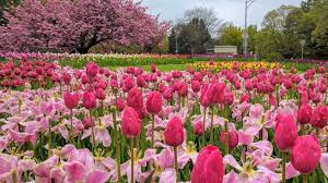 Image result for flowers in highland park, rochester ny