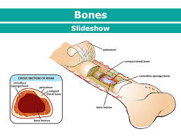 Bones Muscles And Joints For Parents Nemours Kidshealth