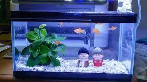 Chọn đèn led phù hợp cho bể cá thủy sinh - Cá Cảnh Đẹp