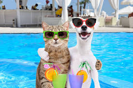 4,554 Dog Cat Summer Stock Photos, Pictures & Royalty-Free Images - iStock