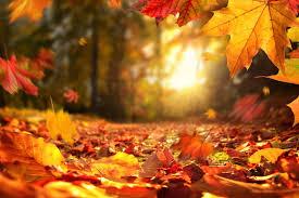 Equinoxe d'automne 2021 : pourquoi la date est fixée le 22 septembre ?