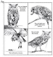 Owls And Owl Pellet Worksheets