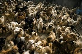 lots of dogs together. Exellent Lots Intended Lots Of Dogs Together A