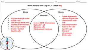 Venn Diagram Comparing Meiosis And Mitosis Mitosis Meiosis Cut Paste Venn Diagram