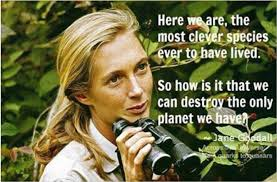 Here We Are Jane Goodall Live By Quotes New Jane Goodall Quotes