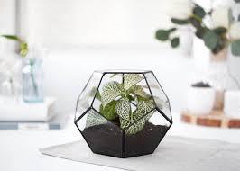 terrarium geometric glass terrarium container geometric planter dodecahedron indoor planters modern terrarium s10