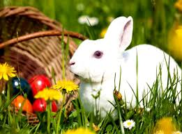 27 cute white baby rabbit wallpaper