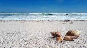 Image result for beach clipart