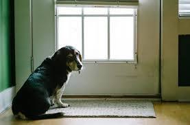 9 best automatic dog door reviews