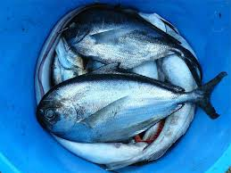 Best Fish To Eat And Those To Avoid Healthifyme Blog
