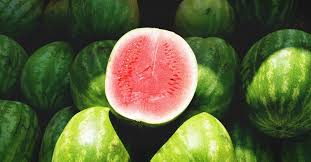 Growing Watermelon Your Guide To Plant Grow And Harvest
