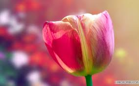 animated beautiful flower images wallpapers