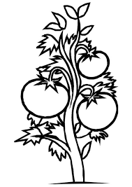 Coloring Page Tomato Plant Garden Pinterest Coloring Pages