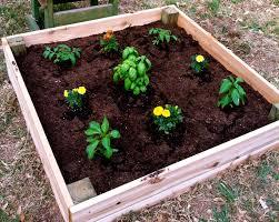 box garden. Perfect Garden With Box Garden M