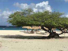 Aruba Taxi Fare Chart 12 Amazing Things To Do In Aruba Popovers And Passports