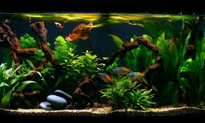 Image result for type of algae buildup around the aquarium tank