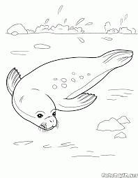 Disegni Da Colorare Seal Rilassante