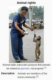 Animal Rights Quotes Impressive Animal Rights Quotes PeopleINT People's Initiatives For