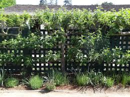 Backyard Orchard Culture  Deep Green PermacultureUnderplanting Fruit Trees