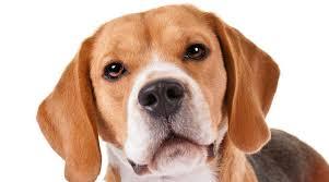 Resultado de imagen para fotos de mascotas y niños